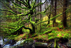 Mossy | by angus clyne