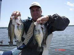 Reelfoot lake crappie fishing guide reelfoot lake for Reelfoot lake fishing report