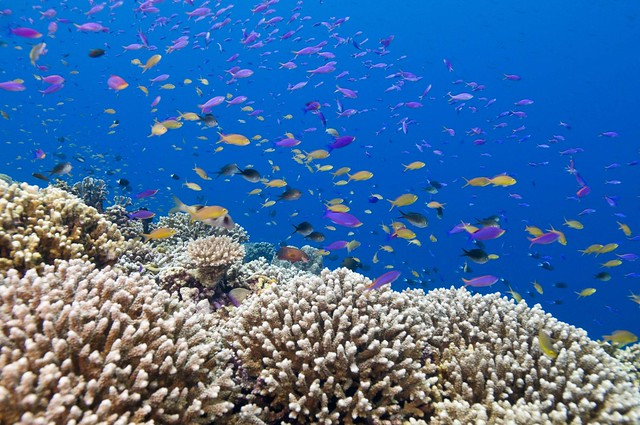 Philippines Tubbataha Reefs
