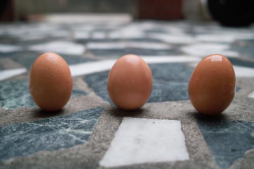 端午立蛋!