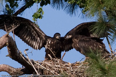 Baytown Bald Eagles - April 26th 2010 | by Dan Pancamo