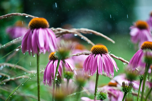 withstanding the rain | by samthe8th
