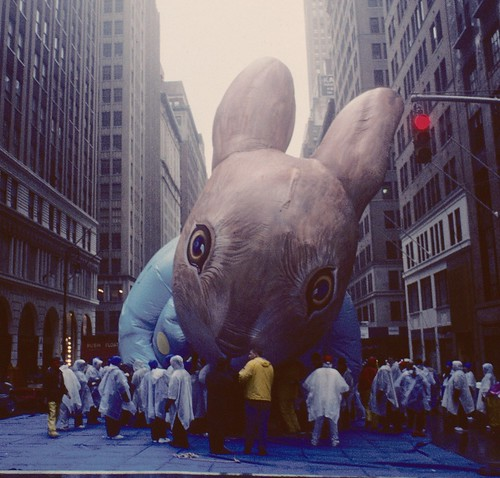 Rabbit on Seventh Avenue | by stevensiegel260