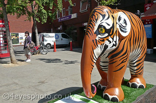 E092 - Tigerphant by Dominique Salm | by 4EyesPhoto