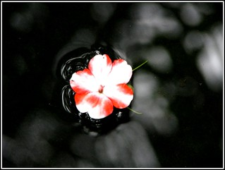 Even on the road to hell a flower will make you smile... | by Manoj Kengudelu