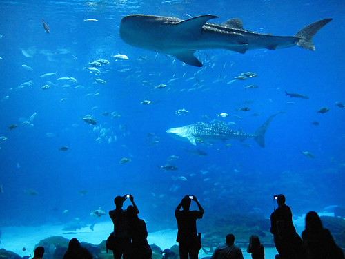Image Result For Ocean Blue Aquarium
