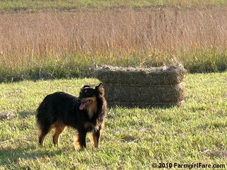 Lucky Buddy Bear Helping Us Bring in the Hay | by Farmgirl Susan