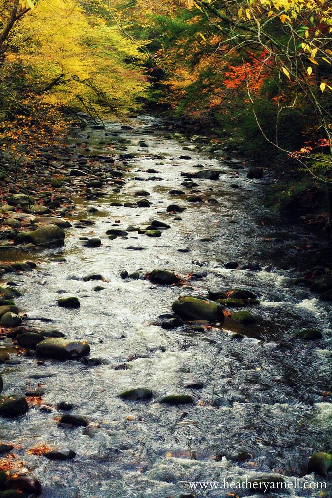 Smoky Mountain Stream in Fall