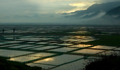 1270 Flooded fields--Xiapu , Fujian Province , China