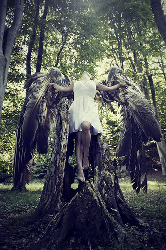 Broken Wings | by Jenny Jacobsson