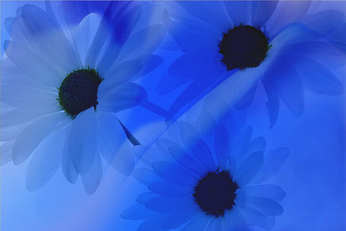 Blue | by Bahman Farzad