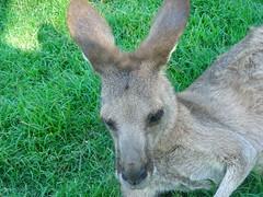 Santuário Lone Pine Koala