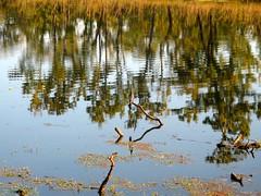 Parque Nacional Real de Chitwan