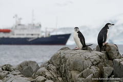 2010-11-23 Antarctica_7918