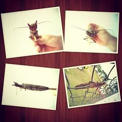 Alguém conhece...? #bug #insect #inseto