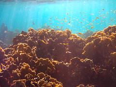 Aruba bajo el agua