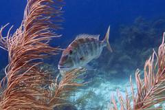 Bonaire Oceanblue 2013