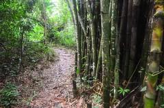 Tiwai Island