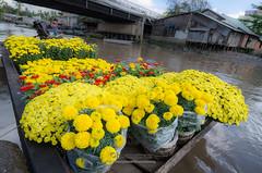 Spring flowers, Mekong Delta, Vietnam