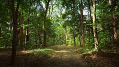 Meiji Jingu's forest : Tokyo, Japan / Japón