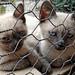 Greece, Macedonia, kittens' melancholia, Mount Athos