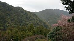 Sites sacrés et chemins de pèlerinage dans les monts Kii