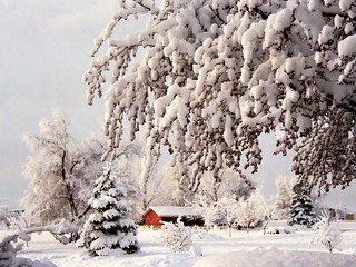 White Winter Wonderland - Boulder, USA | by Batikart