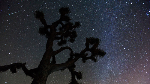 Geminid Meteor above a Joshua Tree | by evosia