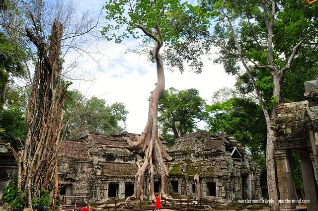 Ta Phrom Temple Siem Reap