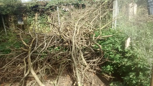 branches Sept 16 (4)