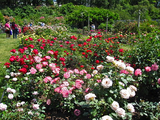 Cranford Rose Garden | by Brooklyn Botanic Garden