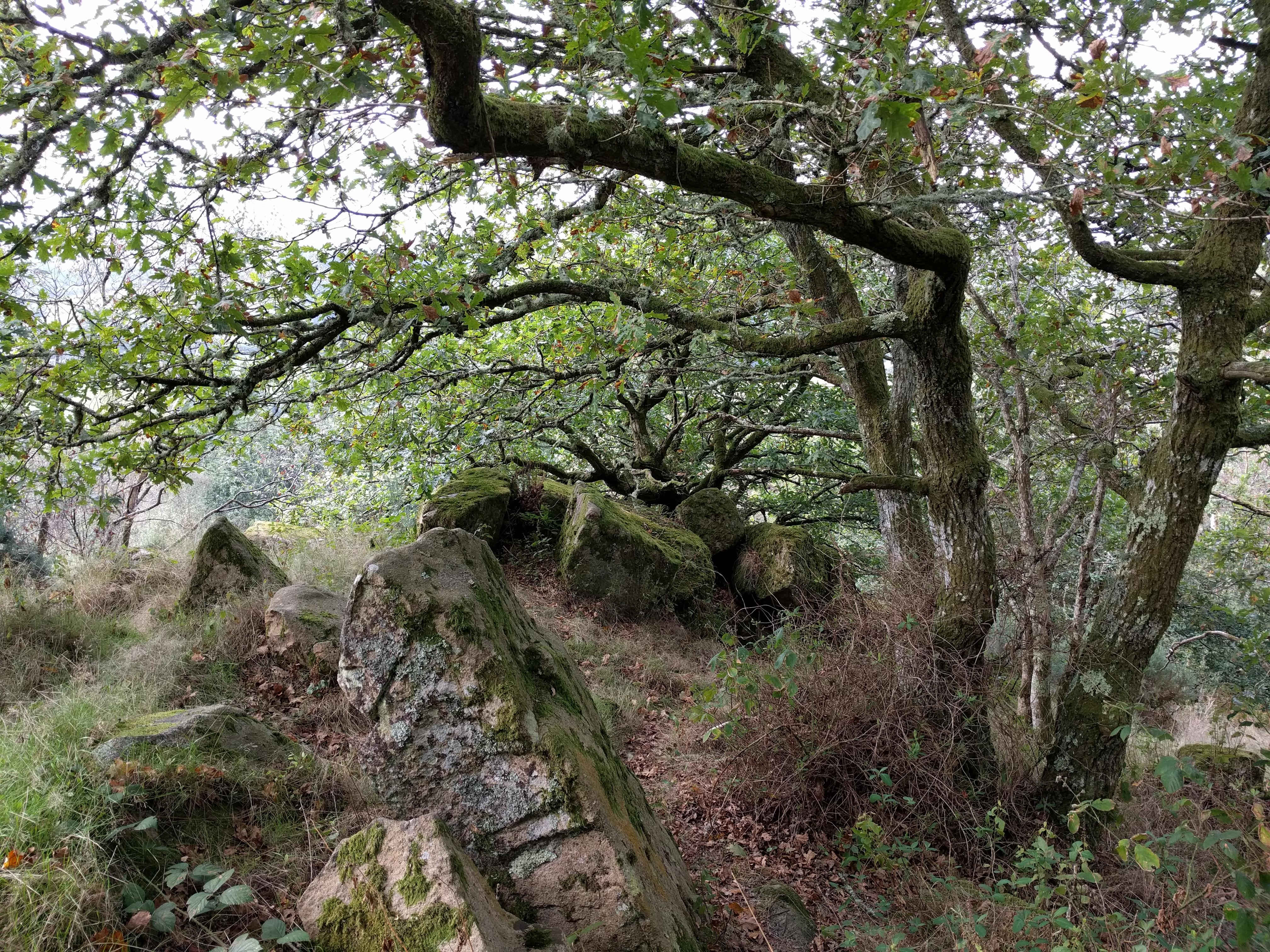 Hunters Tor, Castle Drogo #sh #twomoorsway