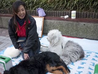 Therapy dogs (and human) raising money in Yokohama, Japan | by maki