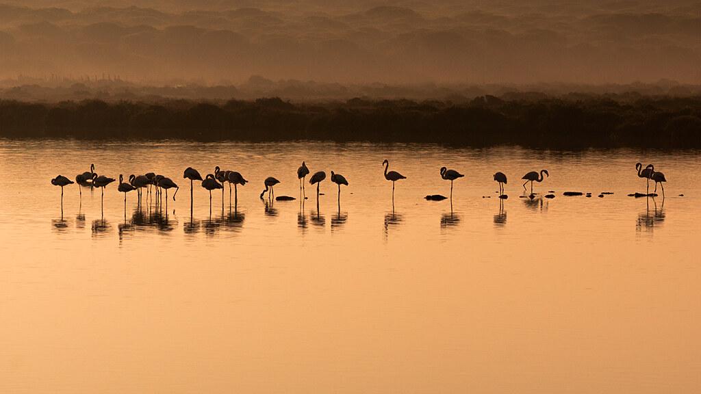 FA07 FA07 Arthur77 (ESPAÑA) - Flamingos Sunrise - Tomada en Parque Natural Bahia de Cádiz, Cádiz el 20042016