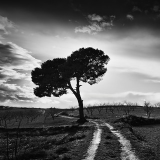 The Way & The Tree | by DavidFrutos