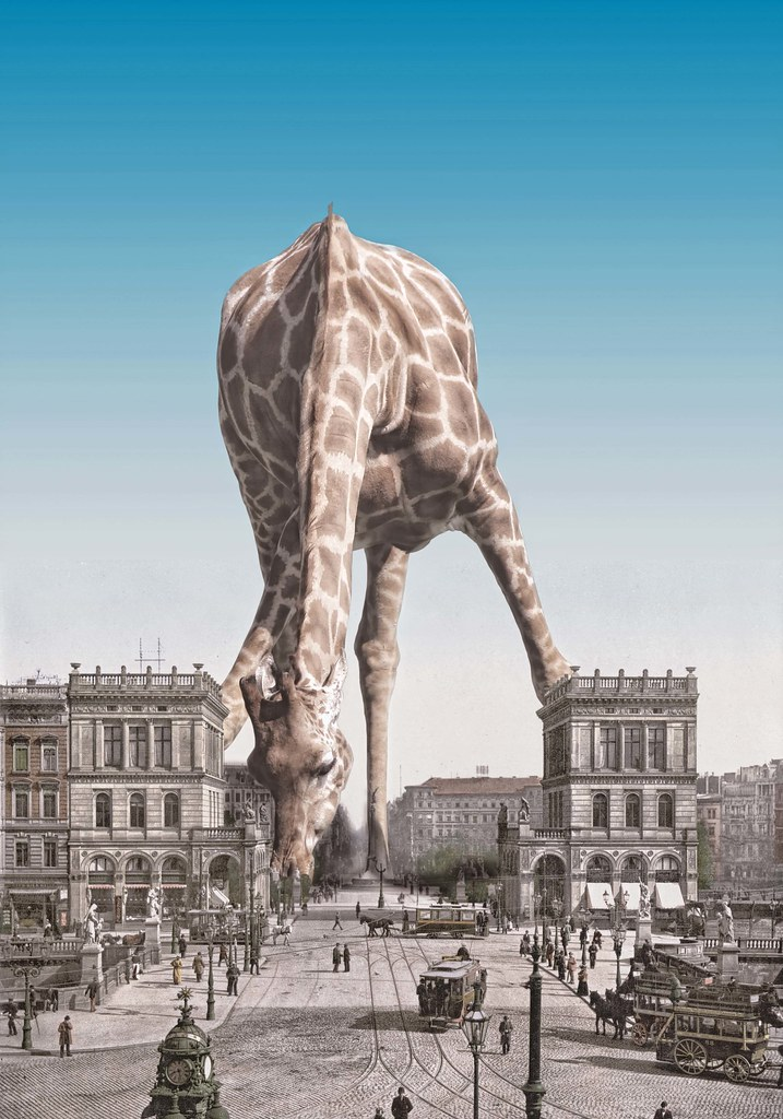 Giraffes were much more common in those days