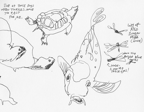 Sketchbook #100: Turtles and Fish