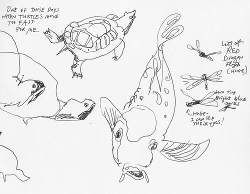 Sketchbook #100: Turtles and Fish