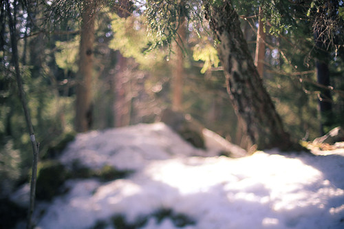Forest Freelensing #02 | by Pierre Pocs