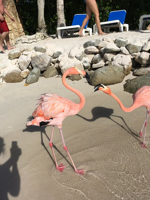Flamingos on the beach in Aruba