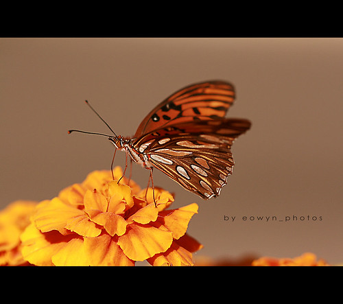 mariposa | by eowyn_photos