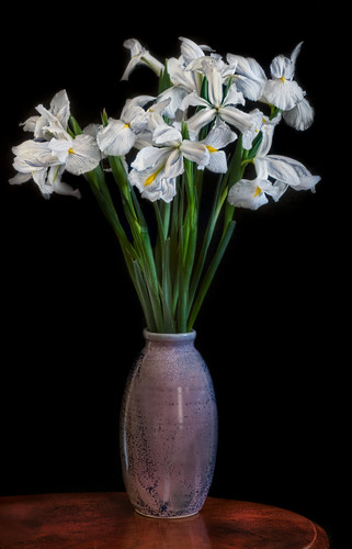 White Irises in a Vase
