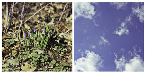 224/365 - finally spring! | by animal at heart