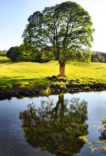 tree in the river, Elterwater | by john_peter_mcgrath