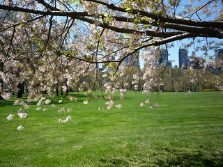 From a Spring Walk in Central Park | by Walking Off the Big Apple