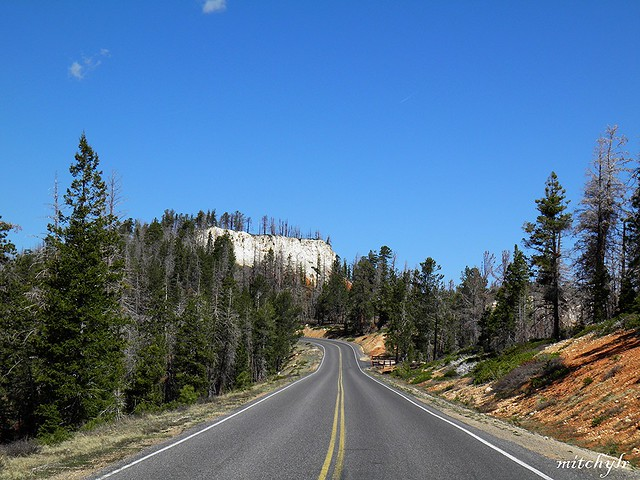 Road Through Bryce