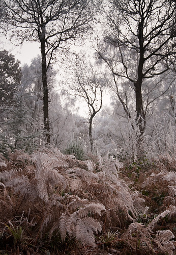 Stoke Woods 2 | by chris-parker