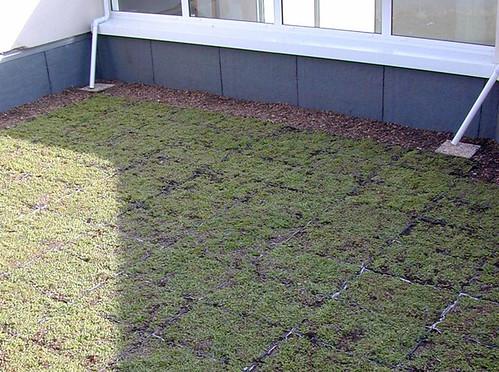 Toiture Terrasse Végétalisée Siplast : Toiture terrasse v u00e9g u00e9talis u00e9e Pose de bacs pr u00e9 v u00e9g u00e9talis u00e9