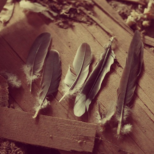 feathers | by say.today