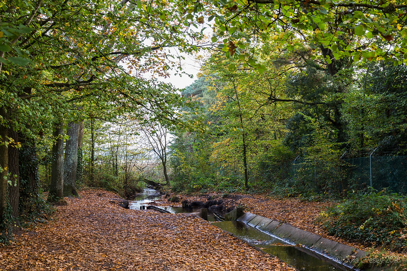 Autumn leaves surround the stream